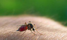 Estudio revela que un anticuerpo humano previene la malaria en ratones