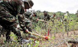 Gobierno manda más efectivos a los Yungas para erradicación