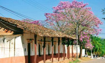 "Declaran ""Maravilla natural, al árbol de Tajibo"" en San José de Chiquitos"