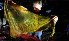 Muere un ballenato por 'shock' después de tragar 40 kilos de plástico