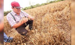 Sequía afecta a 180 mil hectáreas de cultivos en 5 municipios de Santa Cruz