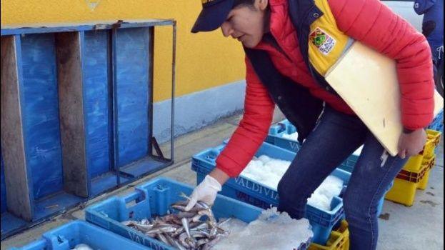 Incautan 560 kilos de peces cola amarilla que pueden provocar cáncer