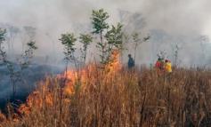 Chiquitanos de San Ignacio ya perdieron 80% de cultivos por incendios