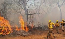 Incendios forestales afectaron una superficie de 801.128 hectáreas en 16 áreas protegidas