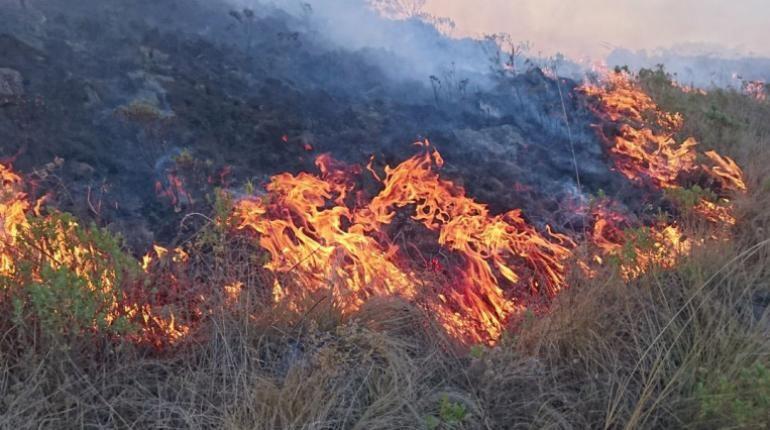 El causante de un incendio en Tarija es sentenciado a reforestar la zona quemada