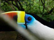 Fotógrafos y periodistas se acercan a la vida silvestre gracias a Samsung