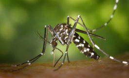 La importancia de usar repelente para prevenir picaduras de mosquitos