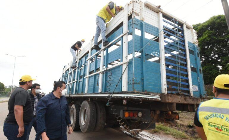 Alcaldía realiza control en el transporte de ganado que llega a Santa Cruz de la Sierra
