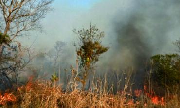 Los incendios ya destruyeron 1.2 MM de hectáreas y persisten en 5 municipios de Santa Cruz