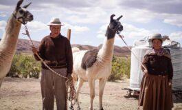 Gobierno invierte más de Bs 29 millones en la producción ganadera de camélido en Oruro
